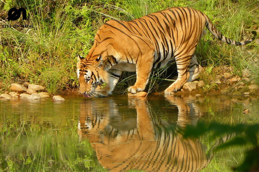 Bardia National Park 5 days 4 nights