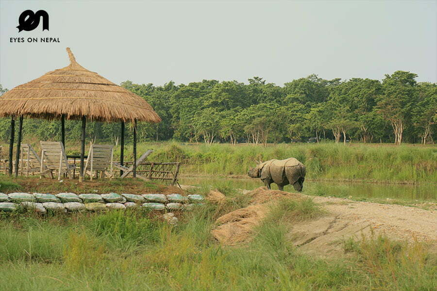 Chitwan Package Tour from Kathmandu | 3 days 2 nights All Inclusive!