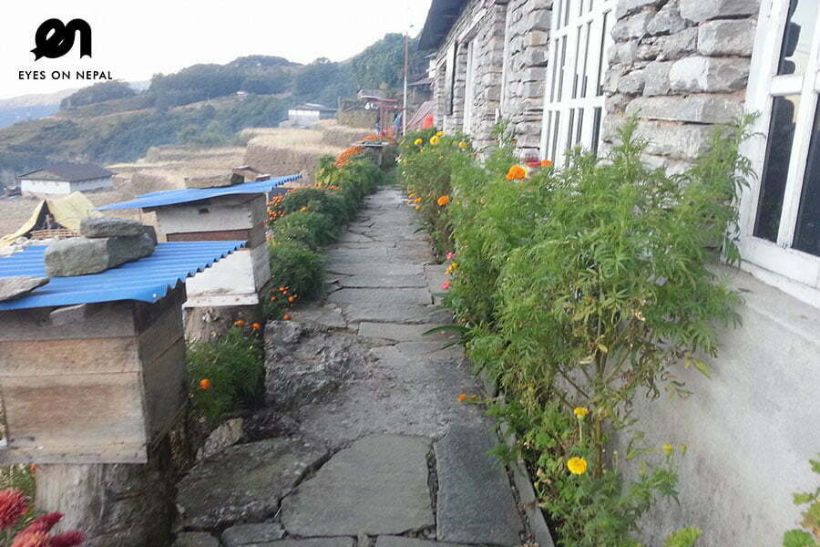 local-guest-house-in-siklesh-trek
